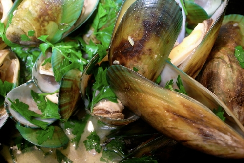 green-lipped-mussel-extract